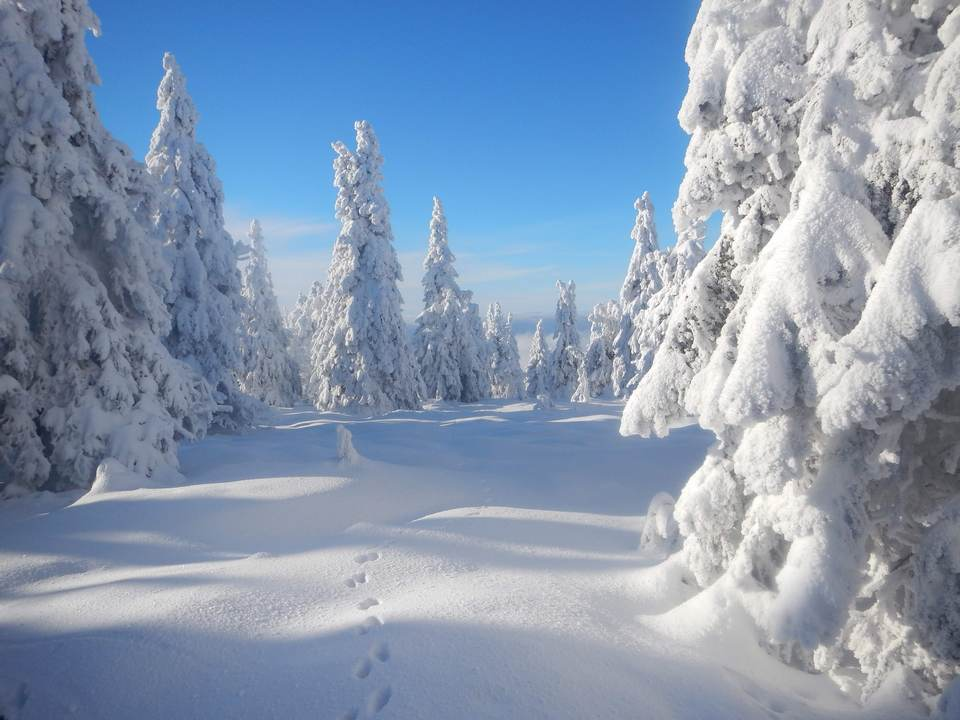 Żywej duszy na Śnieżniku – oprócz nas :)