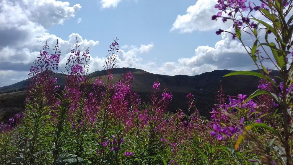Na Połoninach Wetlińskiej i Caryńskiej – Główny Szlak Beskidzki