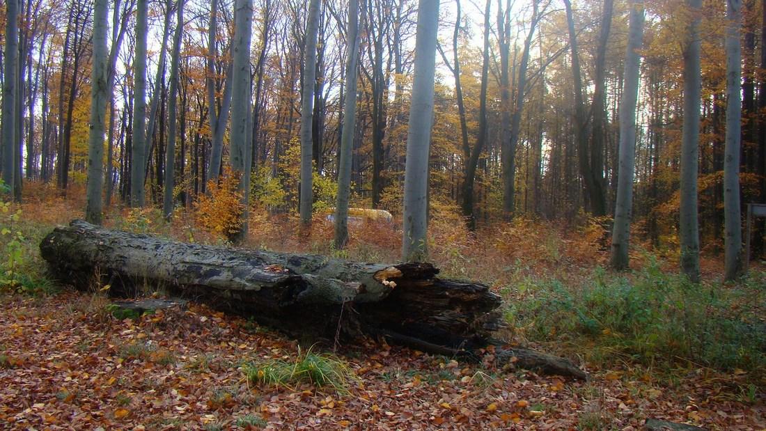 Jesienny Gromnik