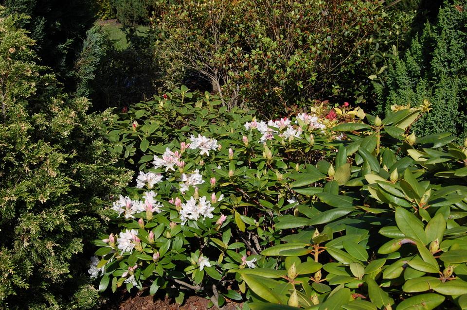8kwitnący biały