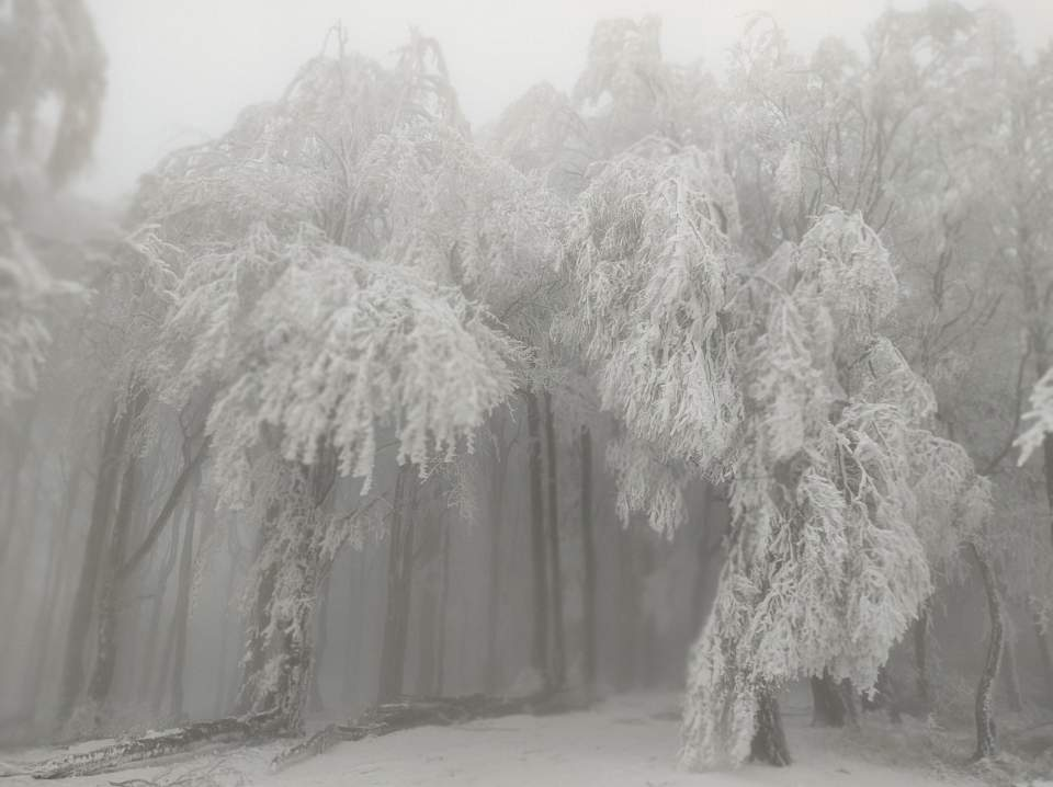001Góry Sowie-wschód na Kalenicy