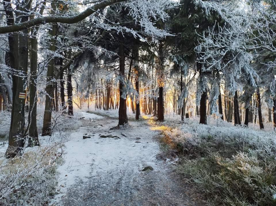 020Góry Sowie-wschód na Kalenicy